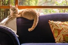 在长沙发的猫 免版税库存照片