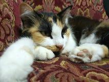在长沙发的猫 库存照片