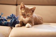 在长沙发的红色小猫 免版税库存照片