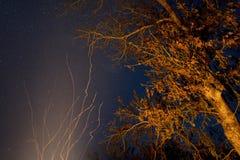 在长的曝光的火在一棵树附近在晚上 库存照片