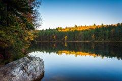 在长的杉木的秋天反射跑水库,在Michaux状态 库存图片