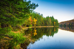 在长的杉木的秋天反射跑水库,在Michaux状态 库存照片