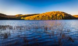 在长的杉木的秋天颜色在Michaux状态森林里跑水库, 免版税库存照片