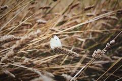 在长的草的蝴蝶 库存照片