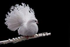在长笛的白色鸽子 免版税库存照片