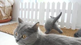 在门前的擦鞋棕垫的小猫 影视素材