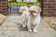 在门前面的小狗常设外部 免版税库存图片