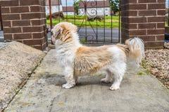 在门前面的小狗常设外部 库存照片