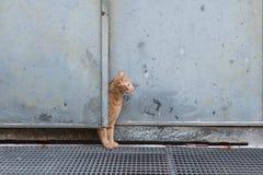 在门后的好奇红色猫 免版税库存图片