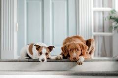 在门廊的两条狗 库存照片