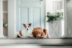 在门廊的两条狗 免版税库存照片