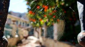 在门生锈的细长立柱上的蜘蛛网 免版税库存图片