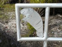 在门的海牛艺术对春天 免版税库存图片