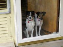 在门的狗 库存图片
