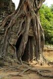 在门的老树 免版税库存照片