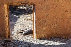在门道入口的懒惰狗 图库摄影