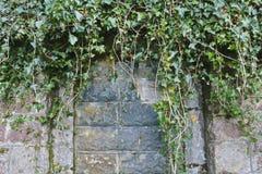 在门道入口的Bricked,与常春藤 免版税图库摄影