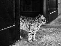 在门附近的逗人喜爱的猫 图库摄影