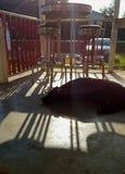 在门廊的狗休息 库存照片