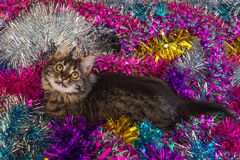 在闪亮金属片的俏丽的猫 图库摄影