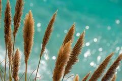 在闪烁的绿松石太平洋前面的蒲苇 免版税库存照片