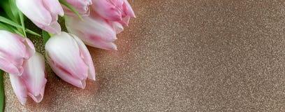 在闪烁背景的嫩白色郁金香 免版税库存照片