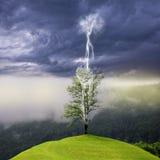 在闪电碰撞的小山的树 免版税图库摄影