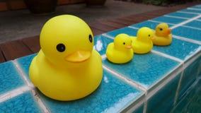 在闪耀绿色游泳池边的黄色鸭子家庭玩偶 库存图片