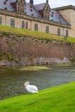 在防护护城河克伦堡城堡,丹麦附近的天鹅 免版税库存图片
