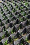 在防止土壤侵蚀的塑料黑蜂窝框架的绿草 库存照片