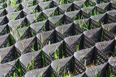 在防止土壤侵蚀的塑料黑蜂窝框架的绿草 免版税图库摄影
