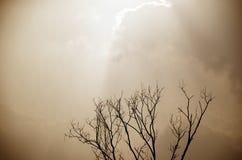 在阳光下的剪影树 免版税库存照片