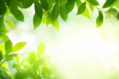 在阳光下的绿色叶子在被弄脏的背景 免版税库存图片
