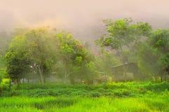 在阳光之下的结构树 免版税库存照片