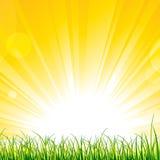 在阳光光芒的草 免版税库存照片