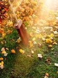 在阳光射线的秋叶 库存照片