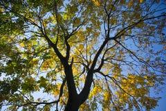 在阳光日出附近的秋叶 免版税库存图片