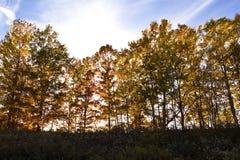 在阳光日落附近的秋叶 免版税库存照片