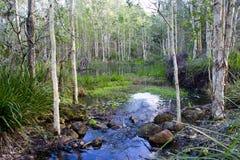 在阳光海岸,昆士兰,澳大利亚的在内地一沼泽地billabong 免版税库存照片