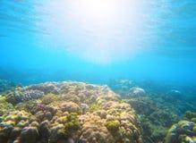 在阳光火光下的珊瑚礁在海水 深刻的蓝色海透视图 免版税图库摄影