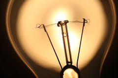 在阳光的电灯泡 免版税库存图片