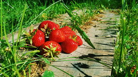 在阳光的草莓 免版税库存照片