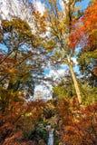 在阳光背景的秋叶 免版税图库摄影
