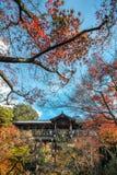 在阳光背景的秋叶 免版税库存图片