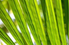 在阳光,抽象bokeh背景的绿色叶子 免版税图库摄影