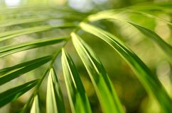 在阳光,抽象bokeh背景的绿色叶子 免版税库存照片