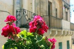 在阳台前面的桃红色大竺葵 免版税库存图片