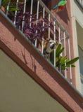 在阳台的咆哮狗 免版税库存图片