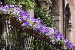 在阳台的紫罗兰色花卉罐 免版税库存图片