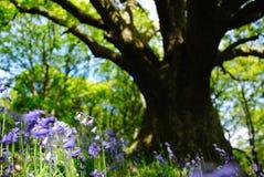 在阴影的会开蓝色钟形花的草 图库摄影